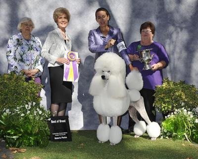 Wine Country Dog Show Catalog Results